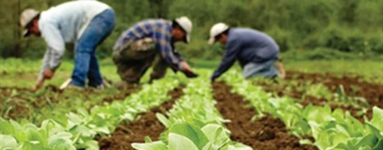 Αποτέλεσμα εικόνας για Μετατέθηκε η περίοδος υποβολής αιτήσεων για τη 2η πρόσκληση του Μέτρου 11 «Βιολογικές Καλλιέργειες»