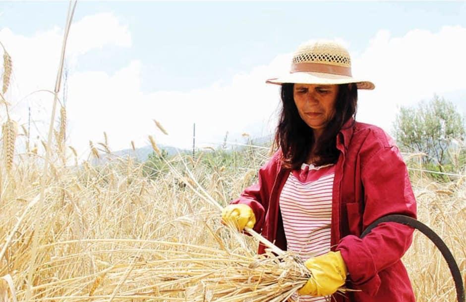 Αποτέλεσμα εικόνας για Συνεργασία Υπουργείου Αγροτικής Ανάπτυξης και Γενικής Γραμματείας Ισότητας για την αγρότισσα