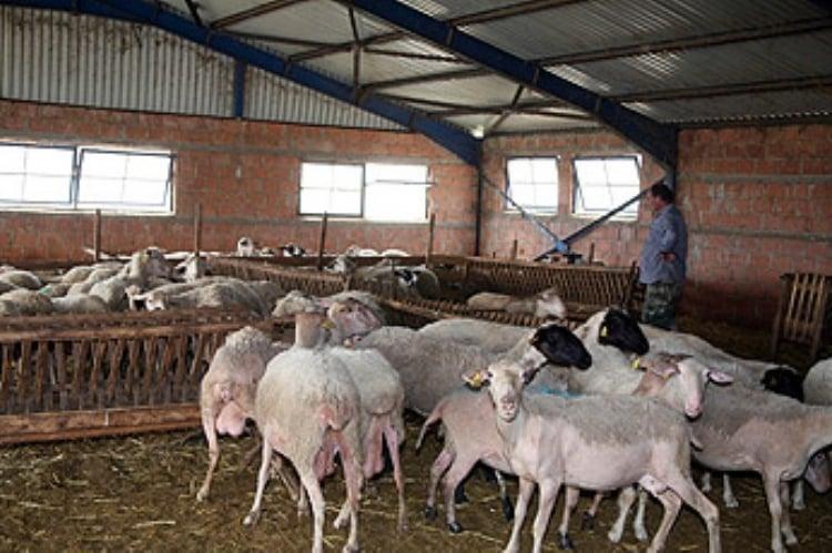 Αποτέλεσμα εικόνας για Ρυθμίσεις για την ίδρυση και λειτουργία κτηνοτροφικών εγκαταστάσεων-Αλλάζει το μοντέλο αδειοδότησης