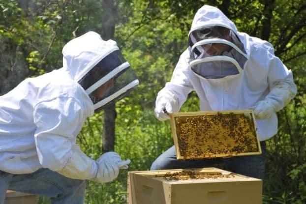 Αίτηση Ενίσχυσης – Δήλωσης Κατεχομένων Κυψελών - Πρόγραμμα Στήριξης των Μικρών Νησιών του Αιγαίου Πελάγους στον Τομέα της Μελισσοκομίας- έτος 2021- Αιτήσεις από 1 Σεπτεμβρίου έως 20 Οκτωβρίου 2021